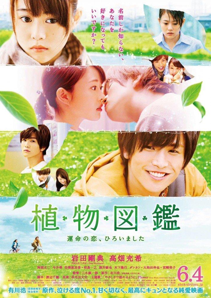 Вечнозелёная любовь (2016)